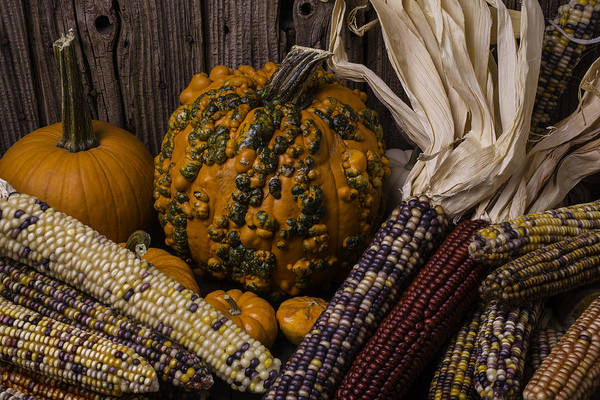 Gourd Photograph - Knuklehead Pumpkin And Indian Corn by Garry Gay