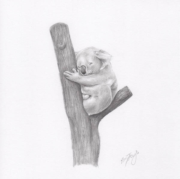 Furry Drawing - Koala by Nancy Ferry