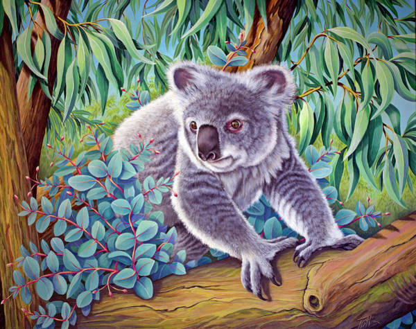 Painting - Koala by Tish Wynne