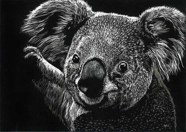Drawing - Koala by William Underwood