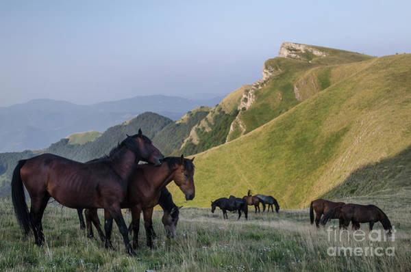 Photograph - Kobilini Steni Peak Horses-1 by Steve Somerville