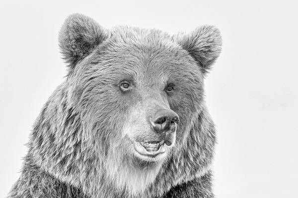 Wall Art - Photograph - Kodiak Brown Bear  by Paul Fell