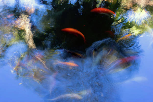 Fish Pond Photograph - Koi Abstract by Christopher Johnson