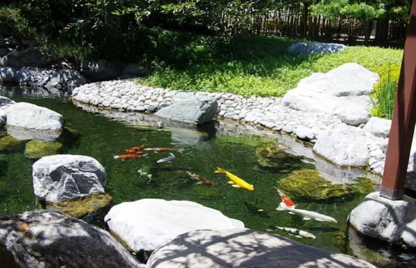 Photograph - Koi Pond 13 Japanese Friendship Garden by Phyllis Spoor