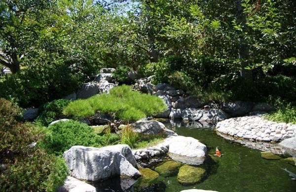 Photograph - Koi Pond 7 Japanese Friendship Garden by Phyllis Spoor