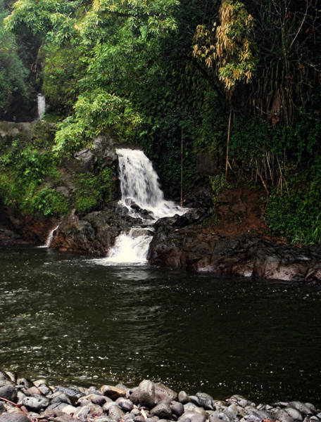 Photograph - Kolekole Stream Waterfall by Pamela Walton