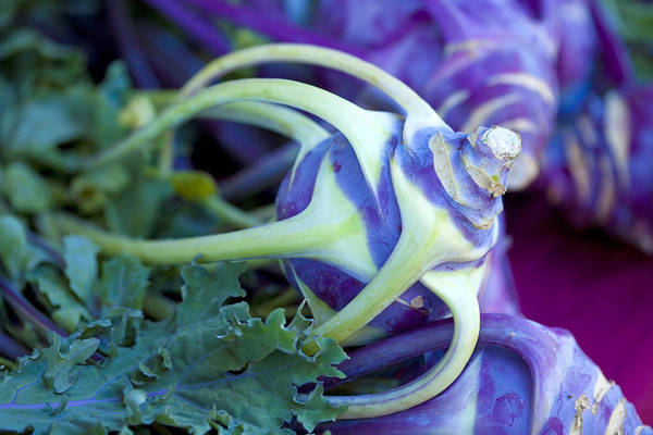 Wall Art - Photograph - Kolrabi Cabbage by Marilyn Hunt