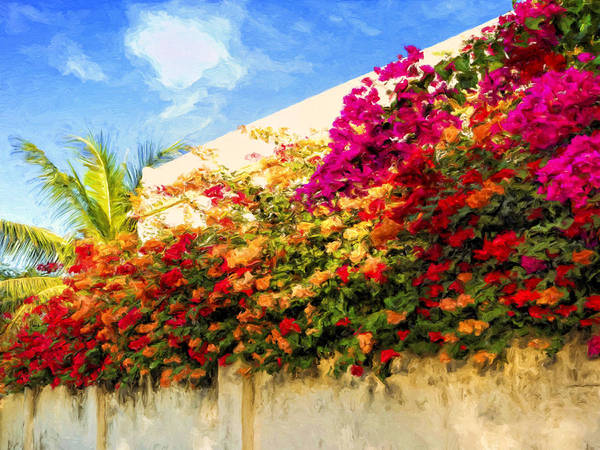 Painting - Kona Bougainvilleas by Dominic Piperata