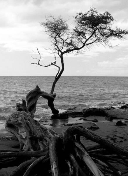 Photograph - Kona Coast Tree by Pat Moore
