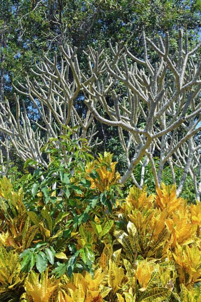 Photograph - Kona Coffee Living History Farm Foliage by Bruce Gourley