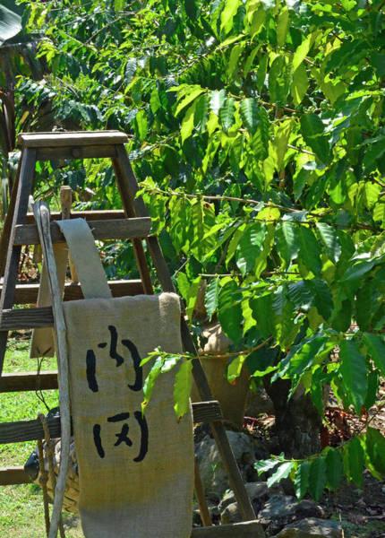 Photograph - Kona Coffee Living History Farm Ladder by Bruce Gourley
