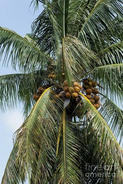 Boynton Photograph - Kooky For Coconuts by Sabrina L Ryan