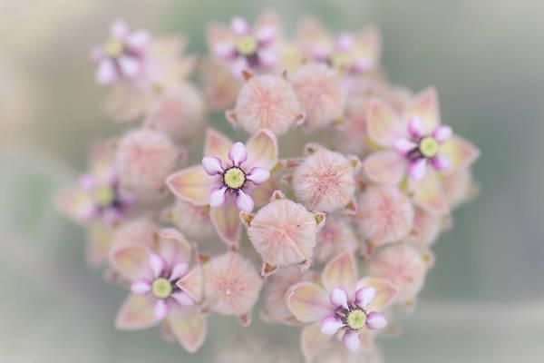 Photograph - Kotolo Flowers by Alexander Kunz