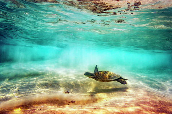 Turtle Photograph - Kua Bay Honu by Christopher Johnson