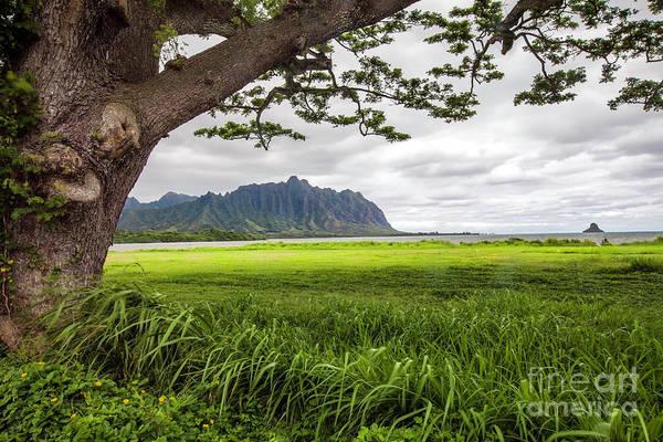 Mokolii Photograph - Kualoa Ridge  by Daryl L Hunter