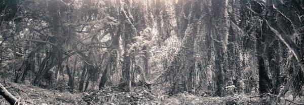 Pokes Wall Art - Photograph - Kualoa Valley Forest Hawaii by Ronald Steiner
