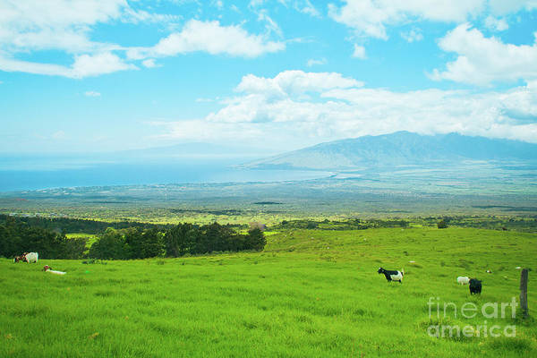 Photograph - Kula Upcountry Maui Hawaii by Sharon Mau