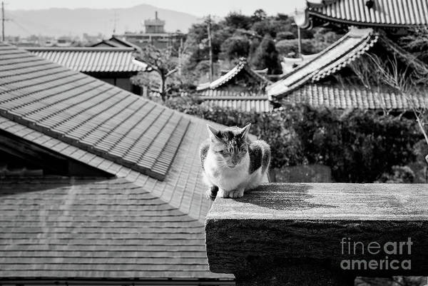 Wall Art - Photograph - Kyoto Kat by Dean Harte