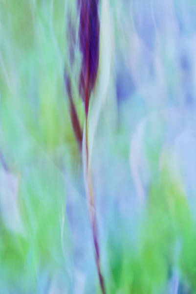 Abstract Impressionism Photograph - L Epi by Variance Collections