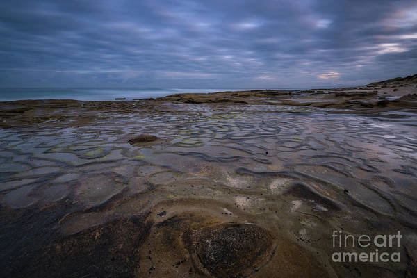 Photograph - La Jolla Brain  by Michael Ver Sprill