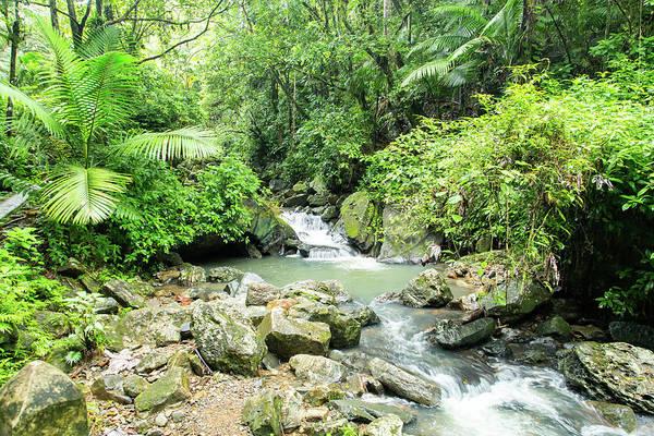 Photograph - La Mina River Through A Tropical Paradise by M C Hood