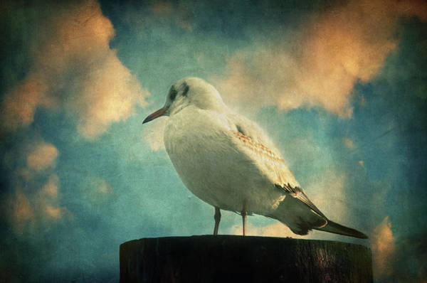 Wall Art - Photograph - La Mouette by Zapista Zapista