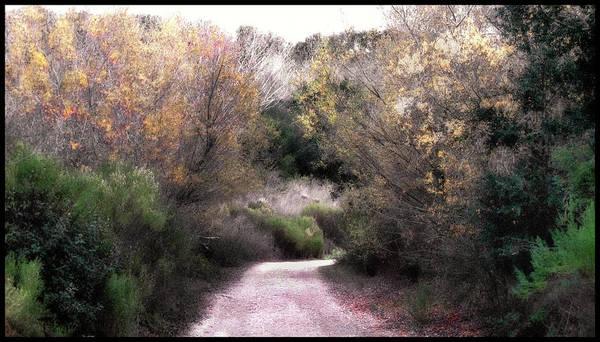 La Purisima Mission Photograph - La Purisima Mission Trail by Lynn Andrews