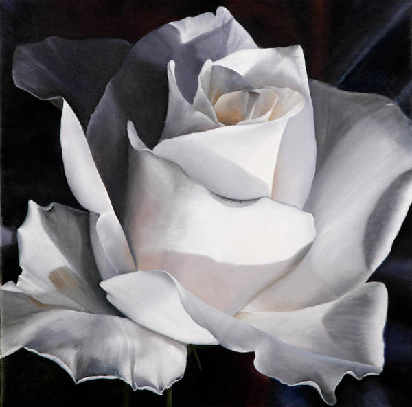 White Background Wall Art - Painting - La Rosa Bianca by Guido Borelli