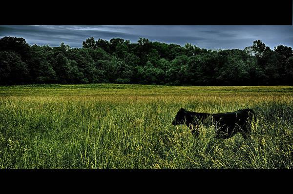 Photograph - La Vache Noire by Mark Fuller