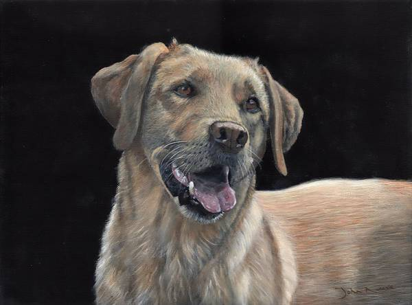 Painting - Labrador Portrait by John Neeve