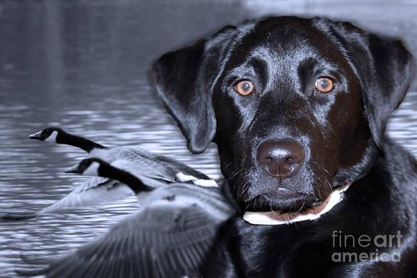Digital Art - Labrador Retriever Thoughts  by Cathy Beharriell