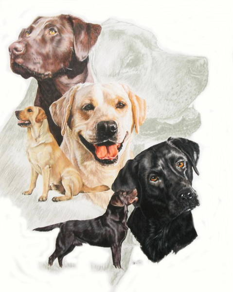 Wall Art - Mixed Media - Labrador Retriever Medley by Barbara Keith