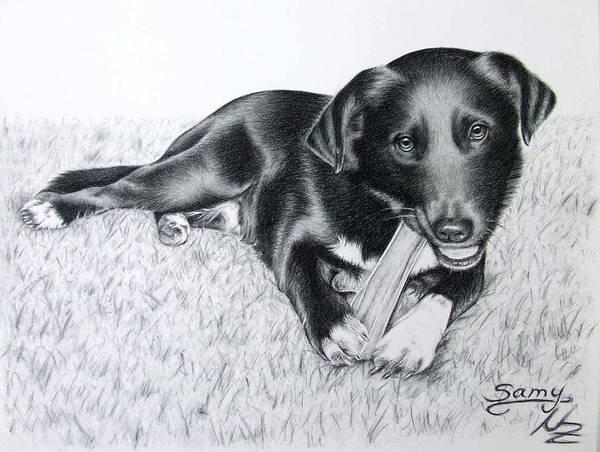 Hund Drawing - Labrador Samy by Nicole Zeug