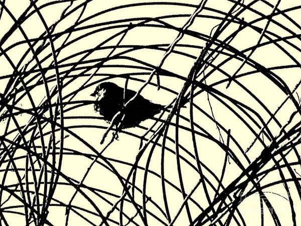 Wire Wrap Photograph - Labyrinth by Joe Pratt