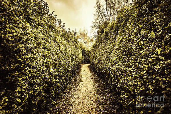 Pathway Photograph - Labyrinth Lane by Jorgo Photography - Wall Art Gallery