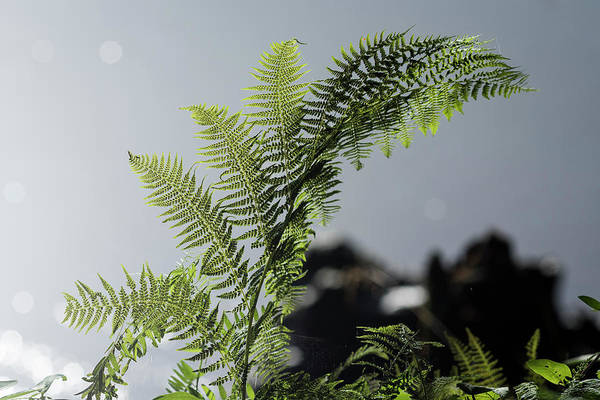 Photograph - Lady Fern And River by Robert Potts