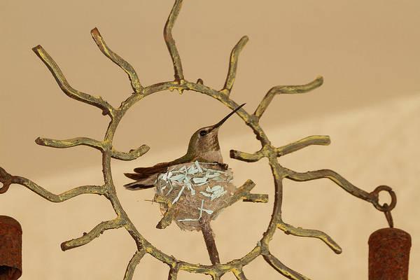 Lady Hummingbird On Her Nest Art Print