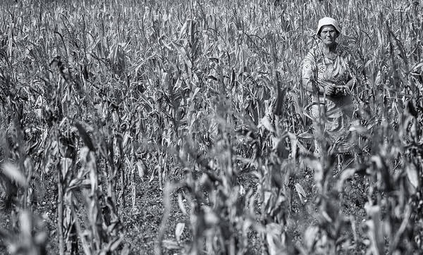 Photograph - Lady Of The Corn by Robin Zygelman