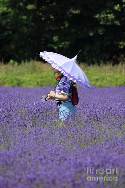 Photograph - Lady With Parasol In Lavender Field by Julia Gavin