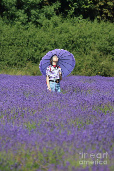 Photograph - Lady With Parasol In Lavender by Julia Gavin