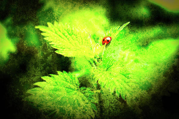 Photograph - Ladybird On Leaf by Jacek Wojnarowski