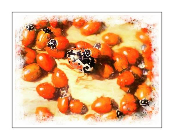 Digital Art - Ladybug Aggregation by Rusty R Smith