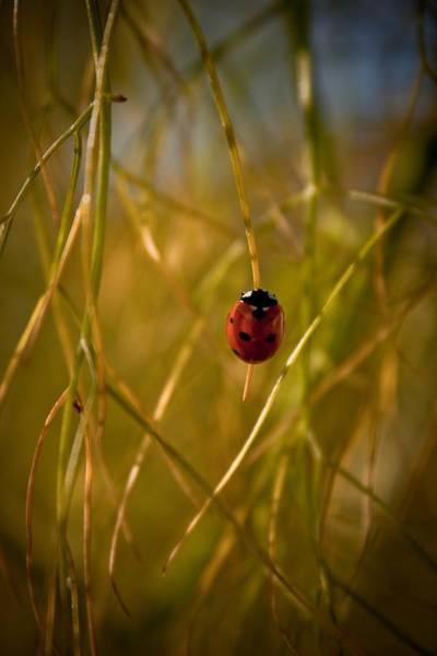 Ladybird Wall Art - Photograph - Ladybug by Danielle Silveira