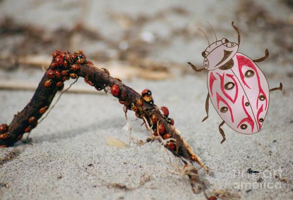 Photograph - Ladybug Highway by Mary Mikawoz