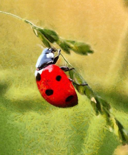 Lucky Charm Painting - Ladybug - Id 16235-220302-6805 by S Lurk