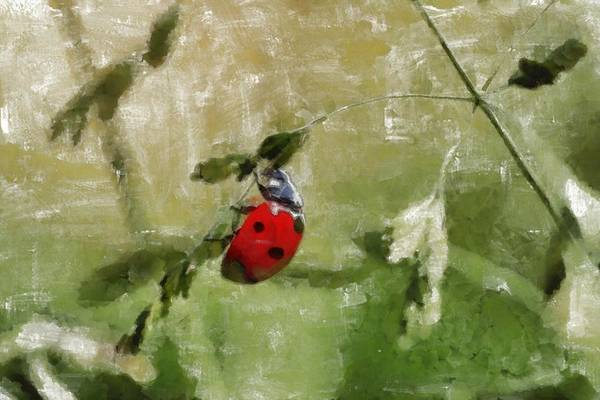 Lucky Charm Painting - Ladybug - Id 16235-220303-6666 by S Lurk