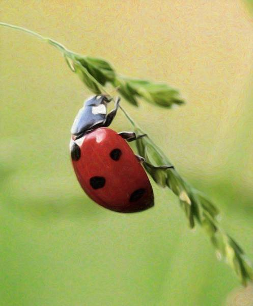 Lucky Charm Painting - Ladybug - Id 16235-220315-9295 by S Lurk