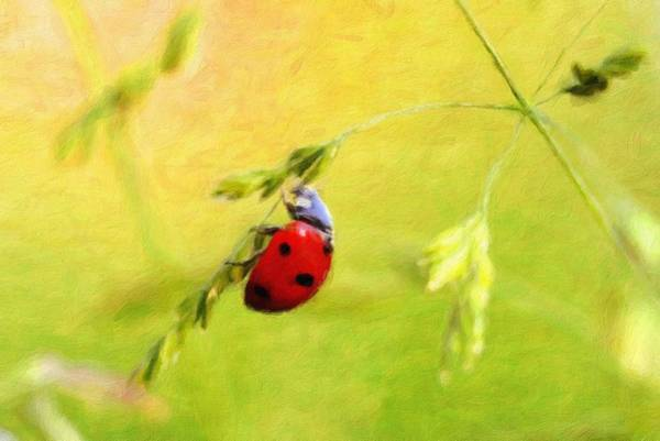 Lucky Charm Painting - Ladybug - Id 16235-220316-1775 by S Lurk