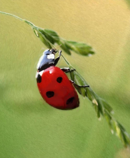 Lucky Charm Painting - Ladybug - Id 16235-220344-6465 by S Lurk