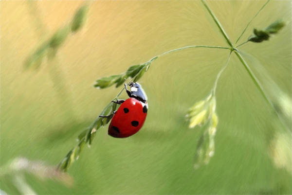 Lucky Charm Painting - Ladybug - Id 16235-220346-6460 by S Lurk